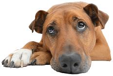 Dogtisch Academy-BARF Online Kurs (2)